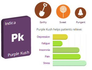 Canada's Top Rated Medical Cannabis Strain is Purple Kush