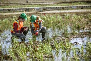 La tourbière Nikanotee (avenir en langue crie) est l'une des premières zones humides remises en état dans le monde.