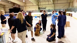 A dog in Wikwemikong receives an examination during a week-long event that saw the Welland & District SPCA and Ontario SPCA partner with the community to provide spay/neuter surgeries and perform wellness exams.