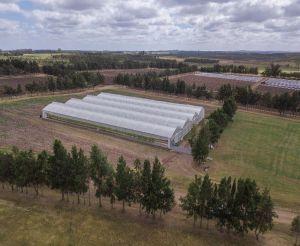 Figure 1: ICC Labs' 21,528 sq. ft. greenhouse in Canelones, Uruguay.