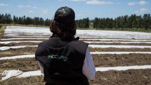 Figure 5: ICC Labs' outdoor fields in Canelones, Uruguay.