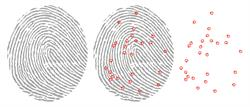 Fingerprint Template Extraction
