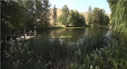 Fishing pond, Tice Ranch