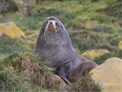 marine mammals, marine biology, Elsevier, animal science