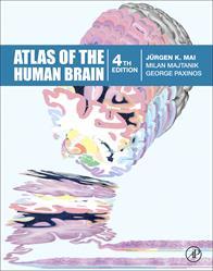 brain, human brain, neuroscience, Elsevier