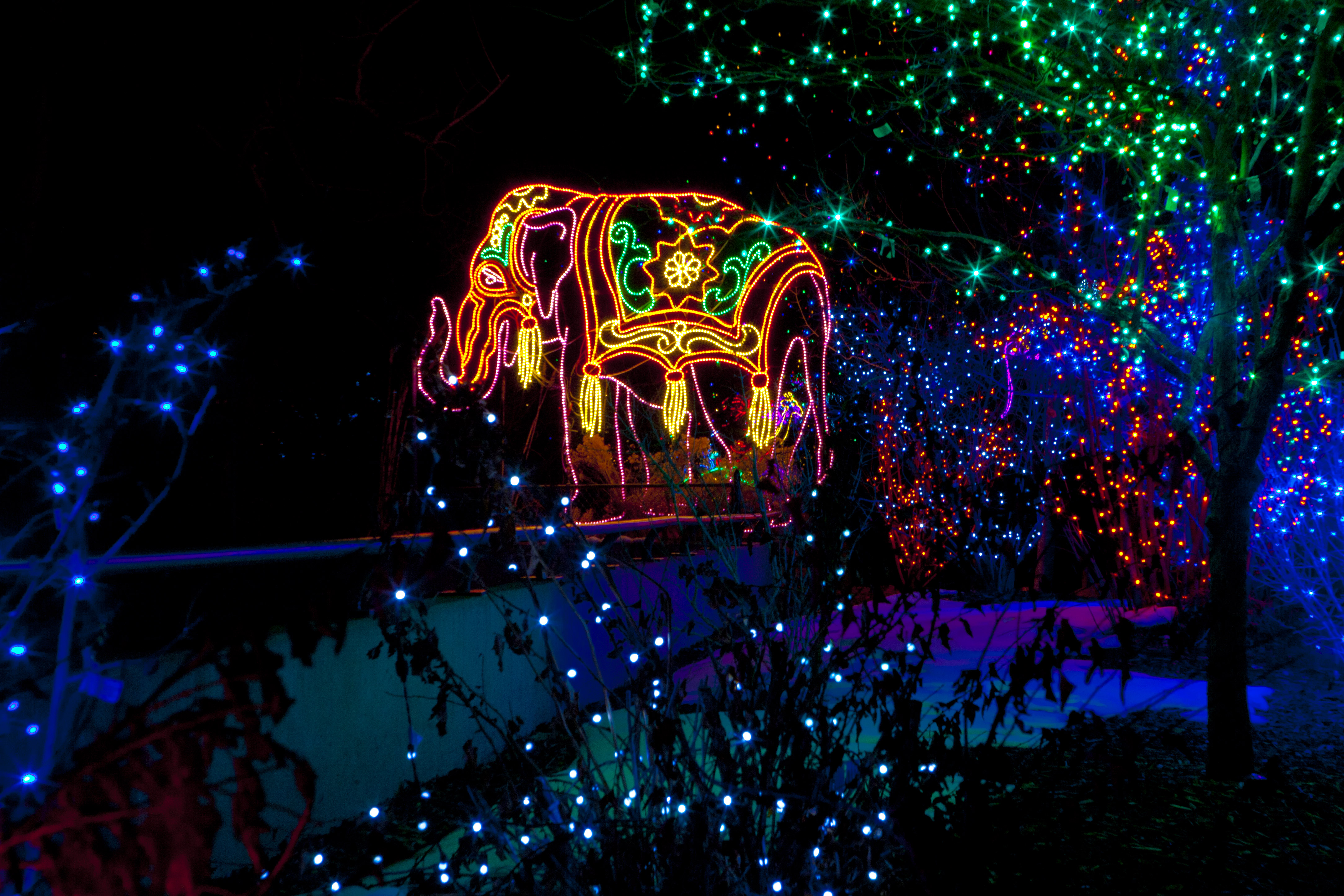 Denver Zoo Christmas Lights