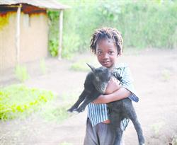 Plan Canada's Gifts of Hope - goat