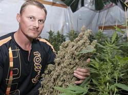 Ross' Gold medical cannabis