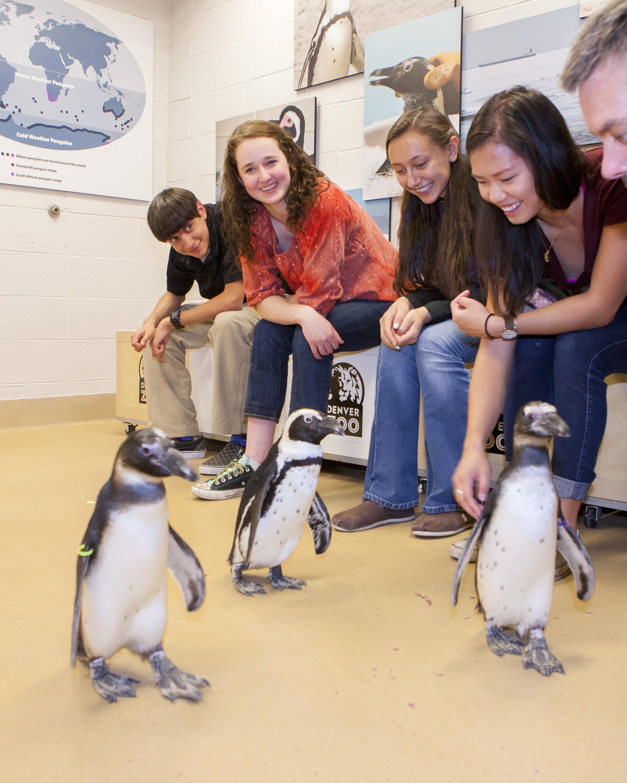 Denver Zoo Offers Summer Of Fun Beginning Memorial Day Weekend