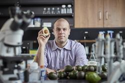 Professor Paul Spagnuolo from the University of Waterloo has discovered a lipid in avocados that combats acute myeloid leukemia (AML) by targeting the root of the disease - leukemia stem cells. Worldwide, there are few drug treatments available to patients that target leukemia stem cells.