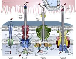 bacterial protein toxins, Elsevier