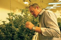 Tim Cullen, CEO of Colorado Harvest Company, will present business strategies at the Marijuana Business Conference, Nov. 17, in Las Vegas