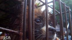 Dog in cage at Yulin dog slaughterhouse