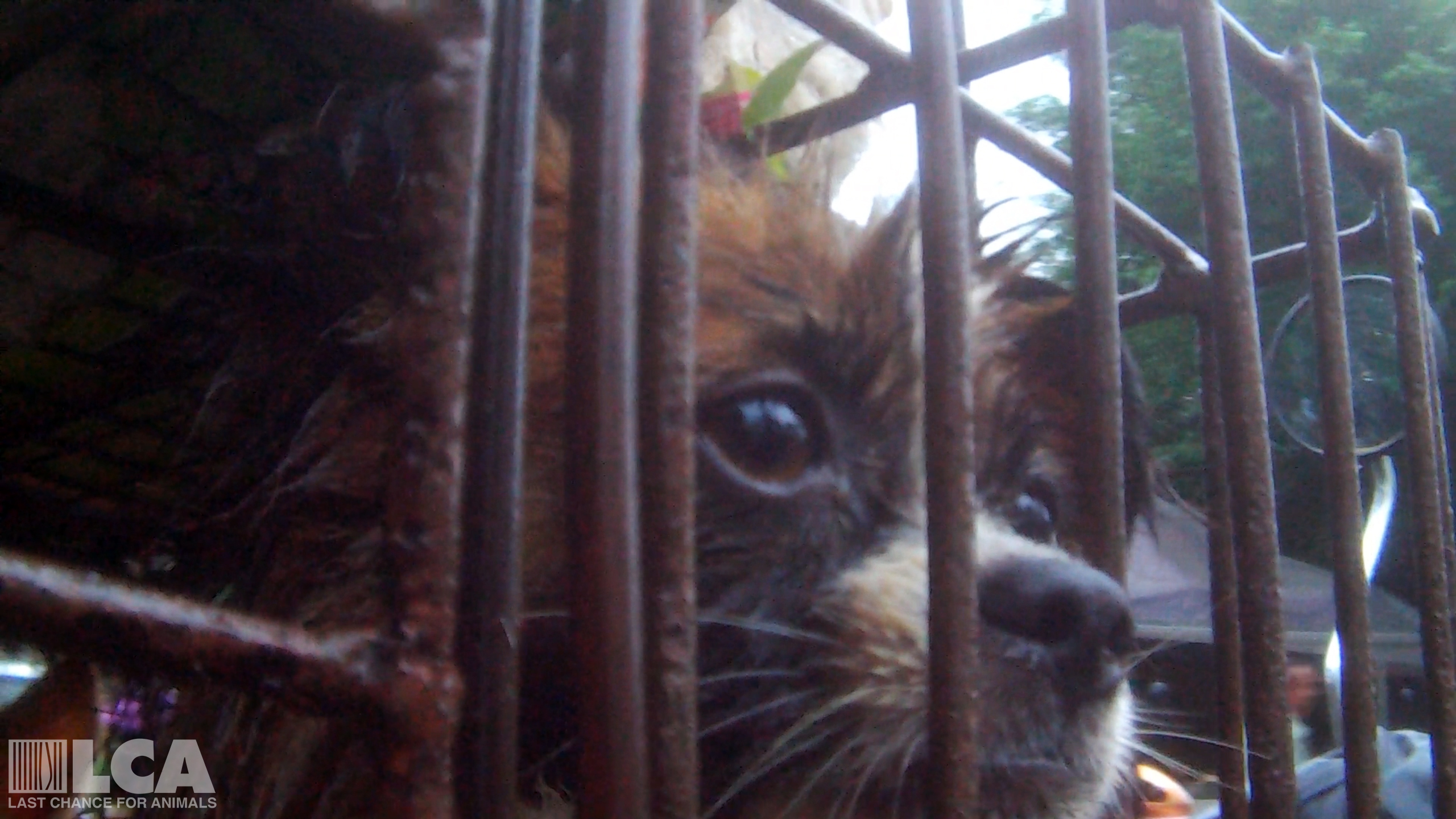 Last Chance for Animals Exposes Severe Cruelty Inside the ... - photo#15