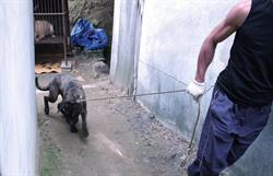 Dog in South Korea to be killed for meat