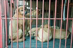 Dogs destined for slaughter in S. Korea's dog meat trade