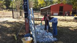 Students from Jemison High School in Jemison, Alabama wash pigs in front of the recently expanded animal science lab. The Jemison FFA chapter won a grant for the expansion from the Grants for Growing program in 2016. (Photo submitted by FFA)