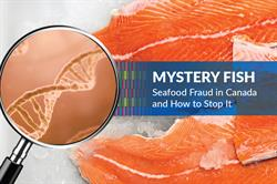 Mystery Fish: Seafood Fraud in Canada and How to Stop it