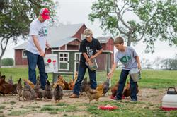 The primary reason families raise chickens is for delicious, homegrown eggs, according to The Chicken Chick Kathy Shea Mormino. But additional benefits, such as providing a source of nitrogen-rich fertilizer and backyard pest control, are discovered soon into keeping chickens.