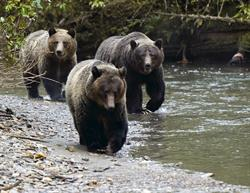 Three Bears Approach by Jim Lawrence