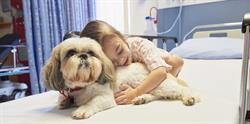 Blayke, a young patient, is pictured in hospital with Molly, a pet therapy dog from BC Children's Dog Visitation Program. Recently the program received a $200,000 grant from PetSmart Charities of Canada.