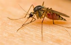 Terminix releases top 20 cities bugged by mosquitoes and shares tips for homeowners to help stop their spread.