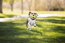With the start of a new year, today PetSmart launches its New Year, New You Pet Collection, and is sharing 10 veterinarian-recommended tips to promote pet health and wellness in 2018.